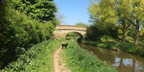 Walking along The Macclesfield Canal | Local Area