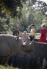 a rhino at Chester Zoo
